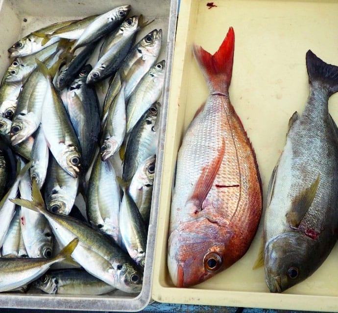 【愛知県】沖釣り最新釣果 寒ブリ・寒ザワラ・寒ビラメが揃い踏み