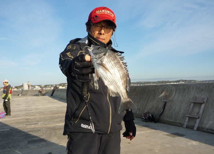 波止フカセ釣りで32cm頭にチンタ級クロダイ入れ食い【常滑港】