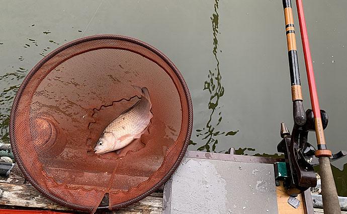 管理池ヘラブナ釣りでなんとか完全試合回避 仕掛け選択ミスで大苦戦