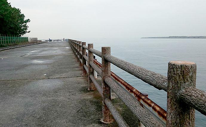 冬の陸っぱり釣り楽し サビキでアジ釣りが好調継続中【大阪・高場】