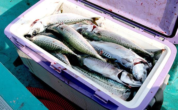『ラングイの寒サバ』釣りが開幕 4つのポイントを解説【和歌山】