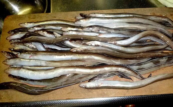 冬がアツい『アナゴ釣り』 チャートで解説するアワセるべきタイミング