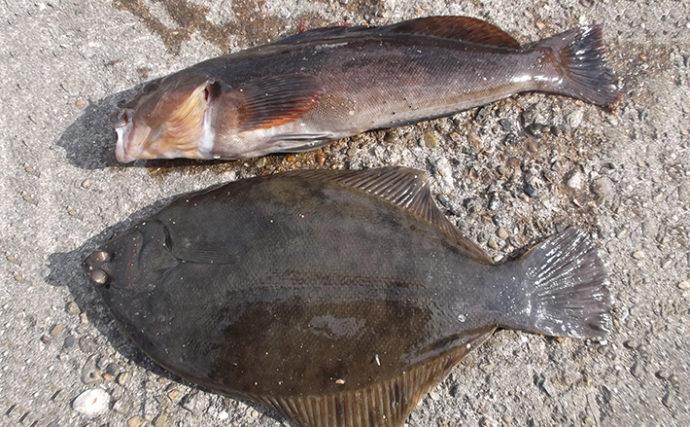 アブラメ狙いの好釣り場紹介:林崎漁港 チョイ投げでポン級の可能性も
