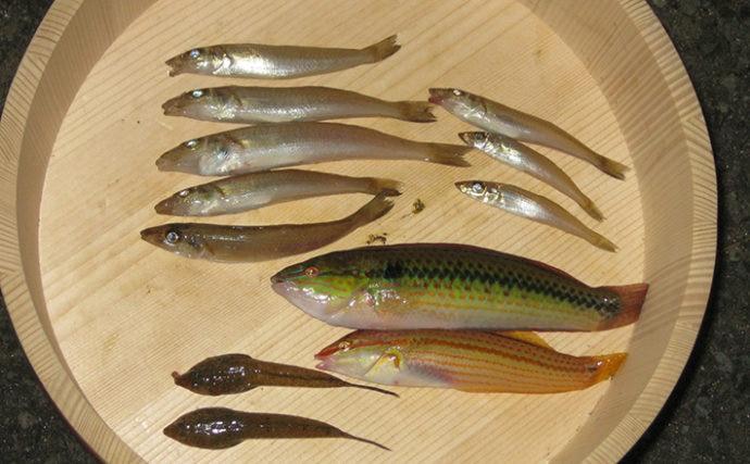 冬の投げキス釣りは場所選びが重要 ラン&ガンで本命8匹【田辺~印南】