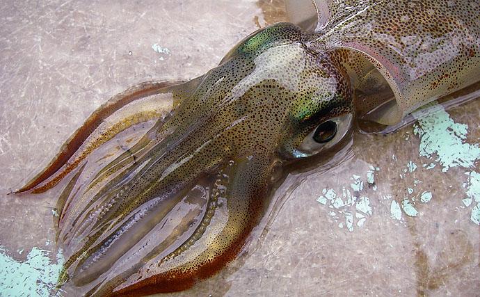 所変われば釣り方変わる:丹後半島のエギングヤリイカ 磯際の浅場を狙う