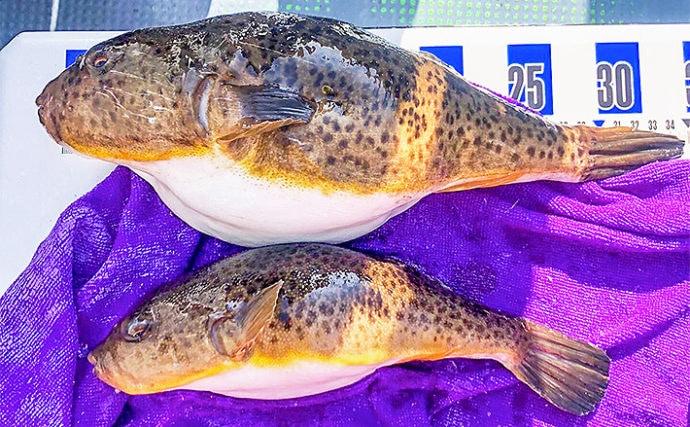 シーズン終盤の『カットウ』釣りで1kg級含みフグ9尾【忠彦丸】