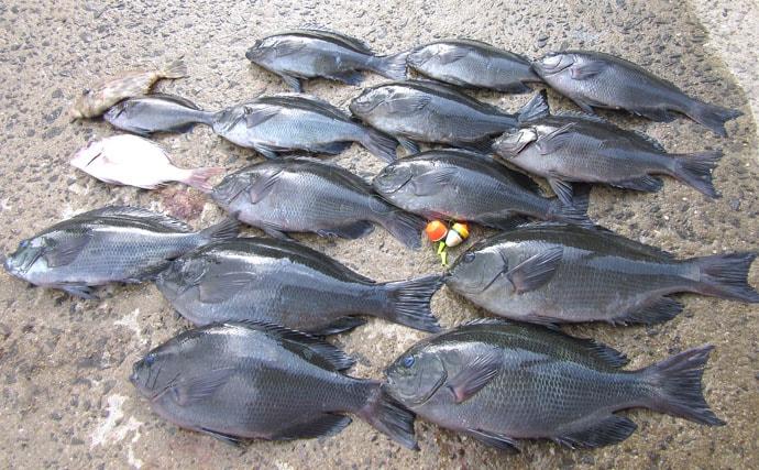 磯フカセ釣りで家族全員35cm級寒グロをキャッチ【長崎・樺島】