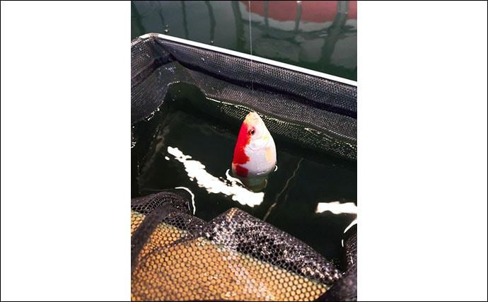 室内釣り堀であたたか釣行 うどん・そば・豆腐の3種のエサで釣り比べ