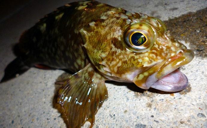 『五目ライトゲーム』白熱 根魚にアジにタチウオも【名古屋港西3区】