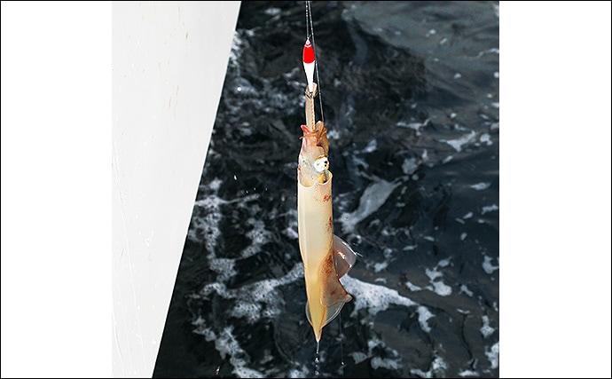【関東エリア2020】最盛期迎えた『ヤリイカ』釣りキホン 手返しが重要
