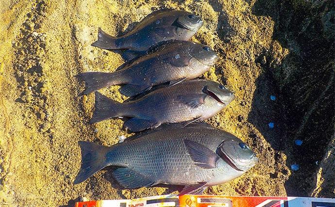 沖磯フカセ釣りで37cm頭メジナ4尾 周囲では45cmも【エボシ岩】