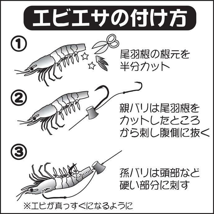 【関東2020冬】『テンヤマダイ』釣り初級攻略 釣趣はスリル満点