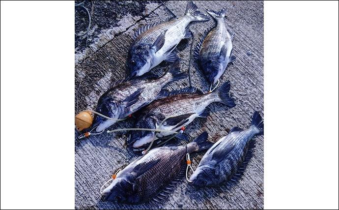 厳しいからこそ価値ある1尾 寒チヌ狙いのフカセ釣りで夢と浪漫を追う