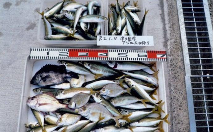 マイボート釣りでアジが入れ食い 130尾の束釣りを達成【大分県】