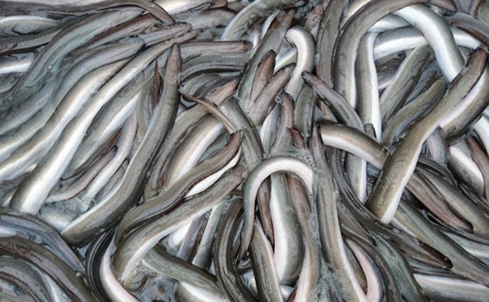 『シラスウナギ』漁が全国的に好調 過去最低だった去年からV字回復へ