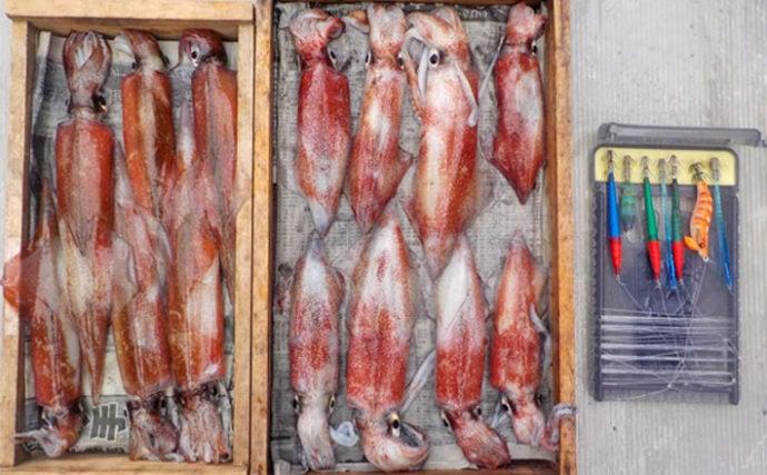 胴突き仕掛けヤリイカ釣行で本命6匹 マイカ混じりで満喫【若狭湾】