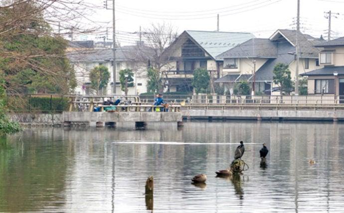 今週のヘラブナ推薦釣り場【東京都・水元公園内溜】