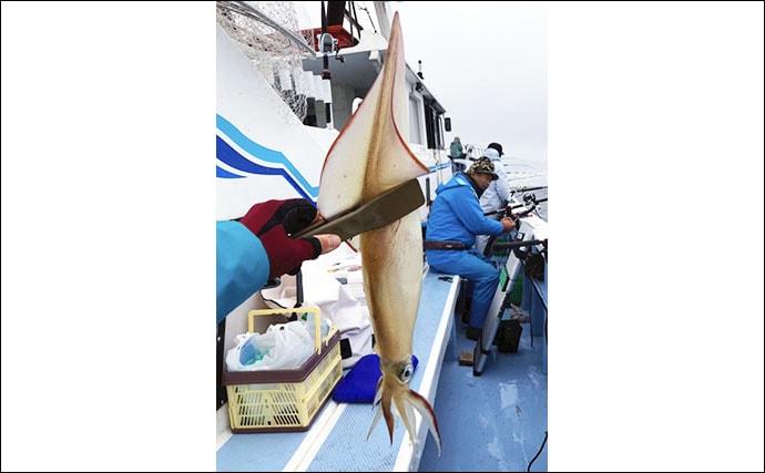 鹿島沖に良型ヤリイカ集結中 50cmパラソル級主体に75尾【幸栄丸】