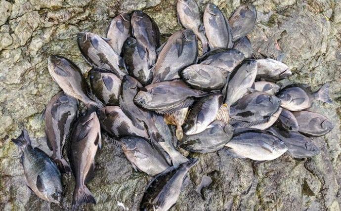 沖磯フカセ釣りで寒グロを堪能 43cm頭に良型主体【大分県】