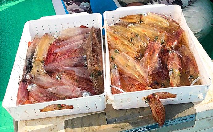【関東エリア2020】開幕直後の『マルイカ』釣り キホンの9ステップ解説