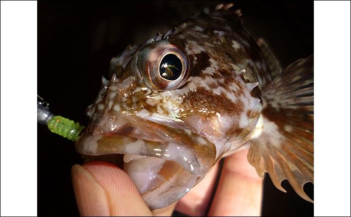 朝マヅメだけ狙う『朝活』釣行堪能 ライトゲームで根魚にタチウオまで
