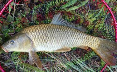 身近な河川で手軽にできる大物釣り 5,000円で始める『パンコイ』