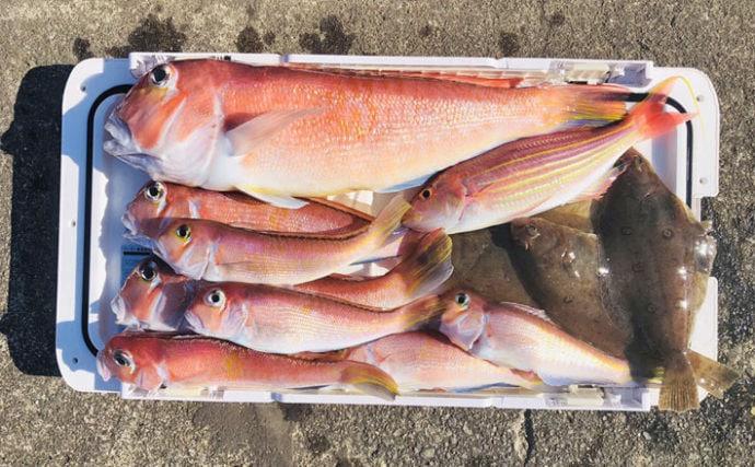 相模湾アマダイ釣りで52cm大型浮上 本命8尾の好釣果【まなぶ丸】