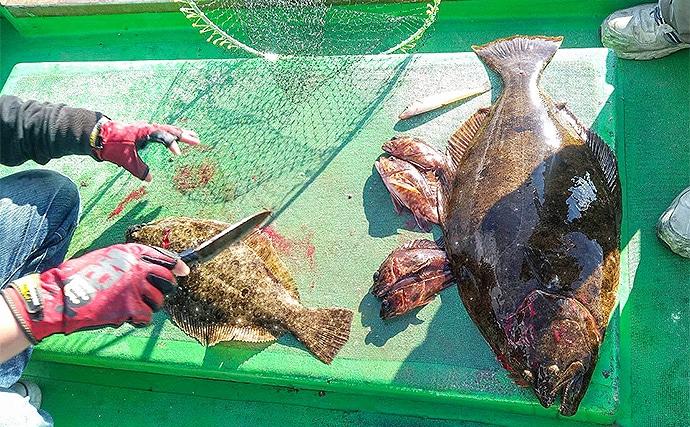 船でのフラットゲームで70cm寒ビラメに60cmマゴチを手中【愛知】