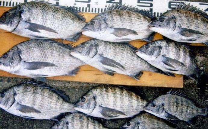 波止フカセ釣りで大当たり 1時間で38cm頭にチヌ11尾手中【苅田港】