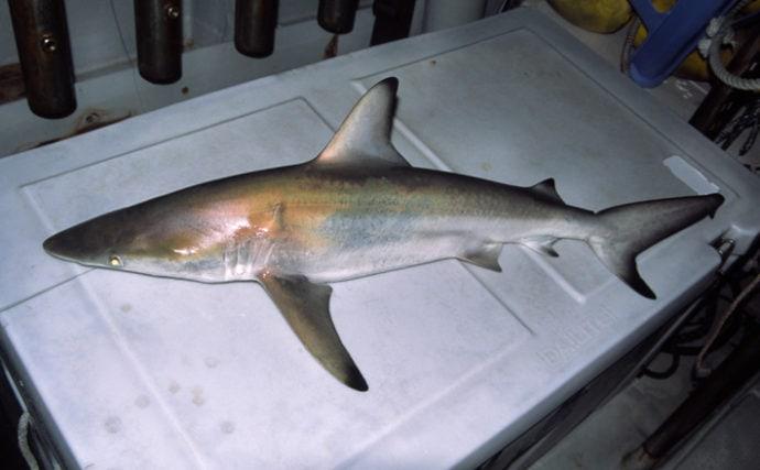 将来的にフカヒレは食べられなくなる? 中国の魚類捕獲規制について解説