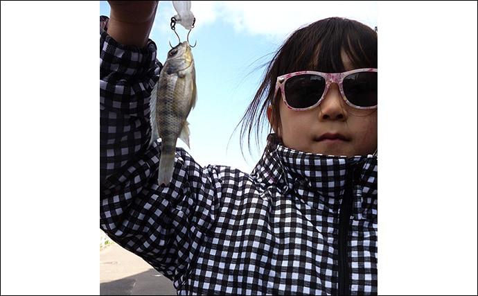 子連れ釣行にもオススメ トップウォーター「ティラピアゲーム」が楽し