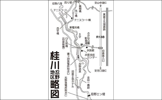 【2020解禁直後】フライフィッシング好釣り場:桂川(忍野)/山梨県