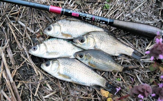 オススメ淡水小物釣り場紹介:西谷田川沿いのホソでマブナ狙い【茨城】