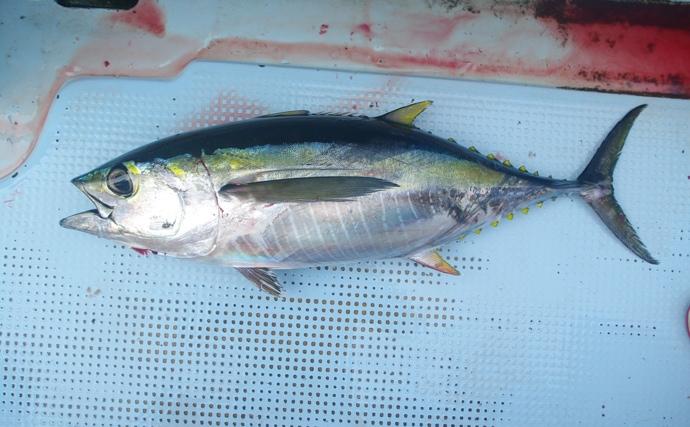 高級魚の売り上げ不調もコロナウイルスの影響?原因を考察