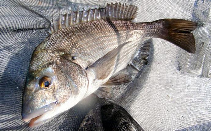 【東海2020春】カカリ釣り乗っ込みクロダイ攻略 「間」を意識しよう