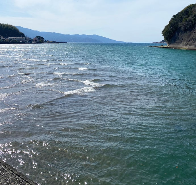 波止フカセ釣りで51cm頭に『乗っ込み』クロダイ6尾を手中【沼津】