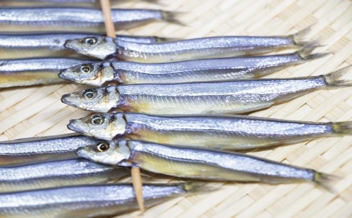 意外と知らない春告魚「キビナゴ」の旬 食べ方によりまちまち?