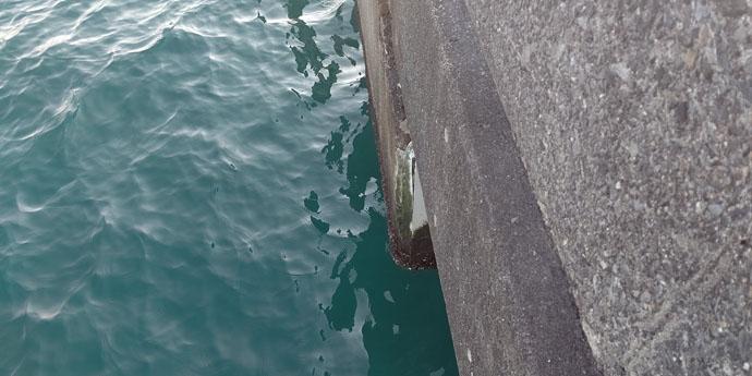 乗っ込み直前のクロダイフカセ釣り 清水港の『高難度』スポットで挑戦