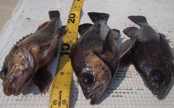 プロが教える「旬魚」の見分け方:『メバル』 春に美味はウスメバル