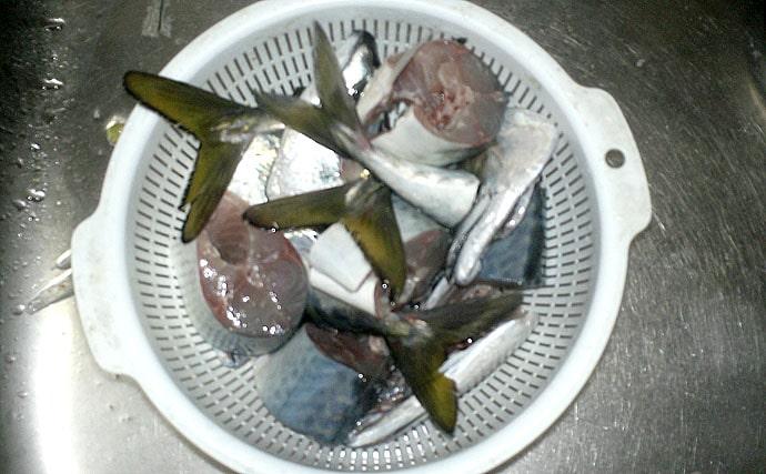 『波止サバ』は美味しく無いはウソ? 絶品料理への道は下処理にアリ