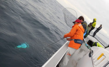 志摩沖ジギングでビンチョウマグロ好調 最大25kg浮上【三重】