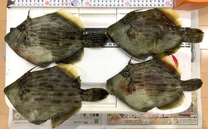 磯から狙う『投げカワハギ』釣り 状況渋く本命4尾【和歌山・串本大島】