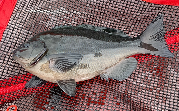 磯フカセ釣りで怪力魚と力比べ 58cmイスズミ強引【和歌山・市江】