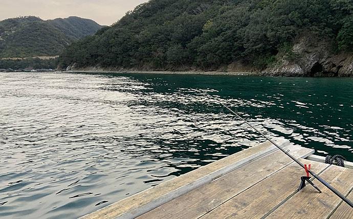 イカダからの『ヤエン』釣りで2.45kg大型アオリイカ手中【三重】