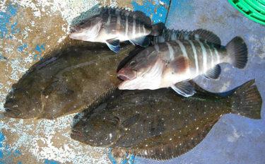 禁漁間近の「大原沖」ヒラメ釣りで本命4尾の好釣果【千葉・第2二三丸】