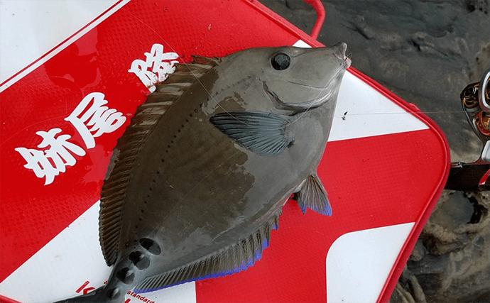 沖磯フカセ釣りで36cmイサギ 本命グレは不在?【和歌山・日置】