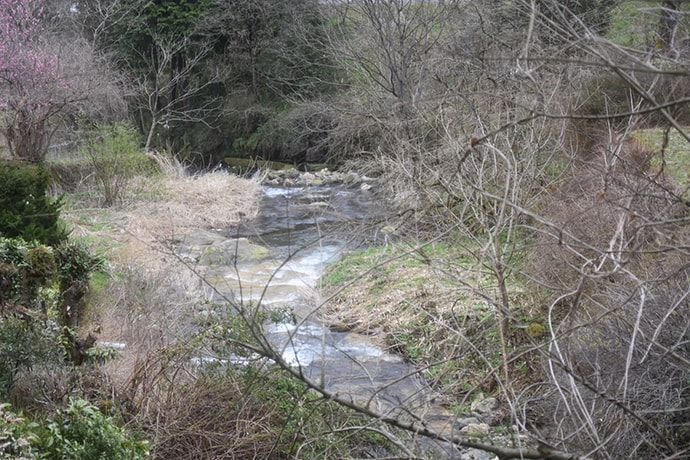 ヤマメ輝く春の渓流 底波にエサを流して本命好調【兵庫・矢田川】