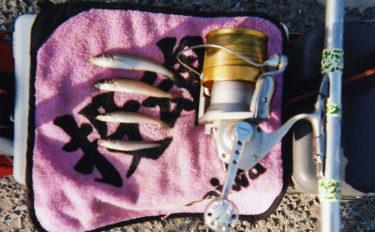 乗っ込みシロギス調査 投げ釣りで小型ながらポツポツ【長浜海浜公園】
