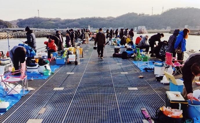サビキで楽々イワシ&アジ 早朝の時合いに3ケタ釣果【豊浜釣り桟橋】