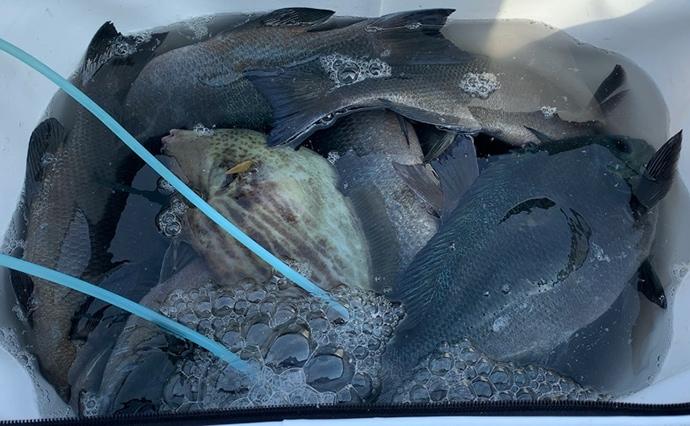 ラストスパート寒グレ釣り 「湧きグレ」接岸で38cm頭に数釣り達成